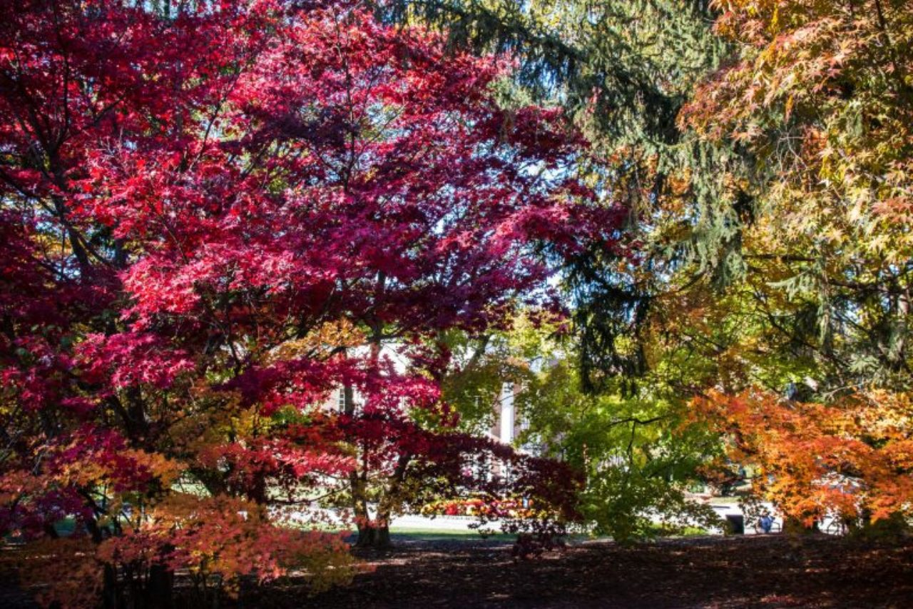 Fall at the Florham Campus is full of vibrantly colored trees. (Photo by Joshua Siniscal)