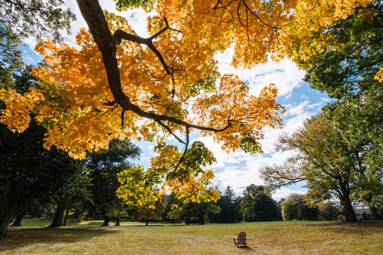 The Florham Campus received Tree Campus USA recognition. (Photo by Joshua Siniscal)