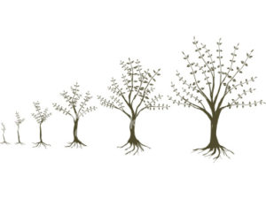 Counseling Office - Trees of life
