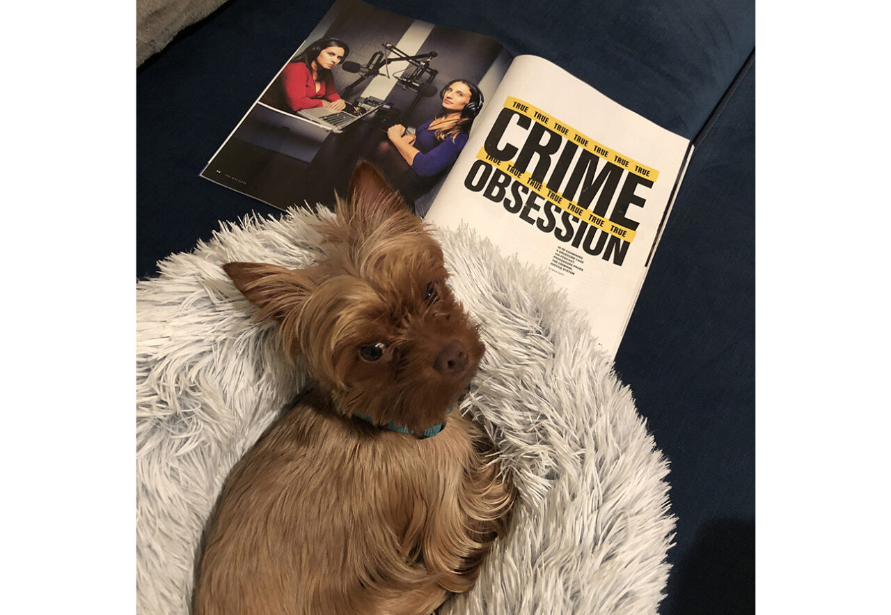 A dog sitting on a fuzzy dog bed with a copy of the FDU Magazine