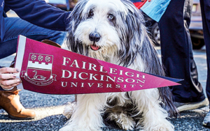 A dog posing with a FDU pennant